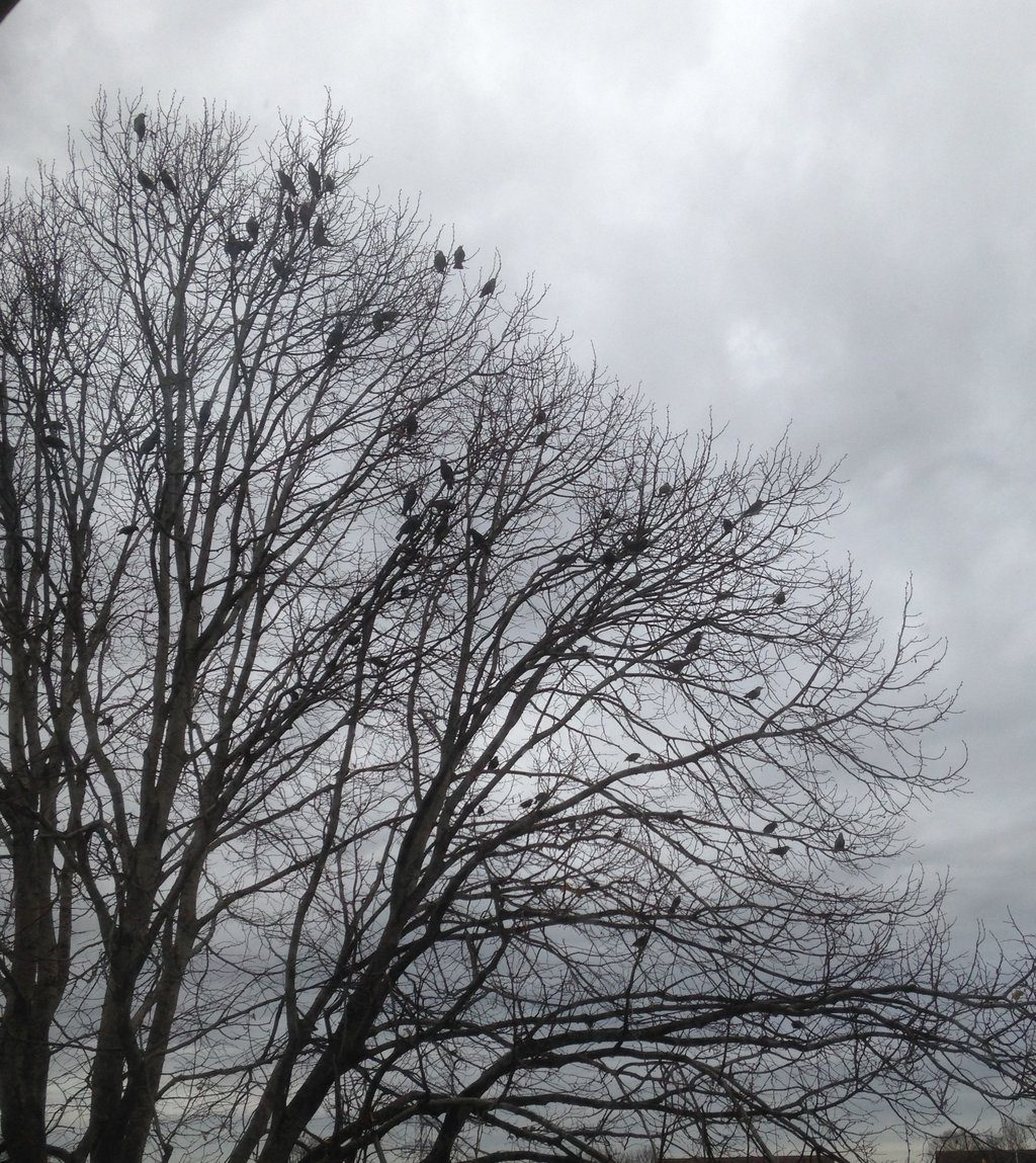 tree with sparrows